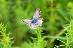 butterfly-827394__340