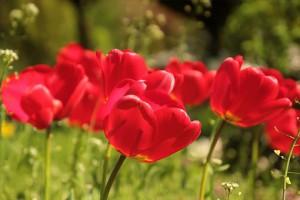 flower-722791__340