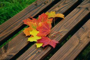 fall-foliage-1740841_640